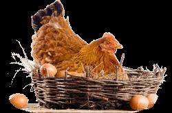 Куриный праздник 15 января