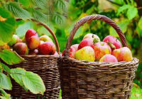 Праздник Яблочный Спас, Преображение