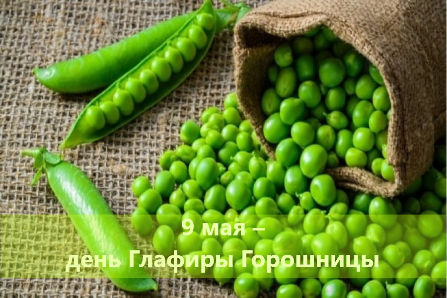 9 мая – традиции, ритуалы, обычаи, приметы в день Глафиры Горошницы