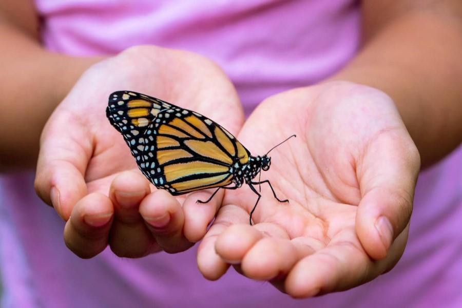 Что значит, если на человека села стрекоза или бабочка: народные приметы
