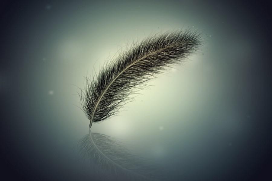 Что значит примета, если залетело перо в окно или нашлось на улице?