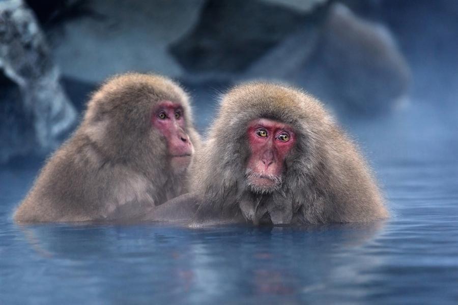 Год водяной обезьяны