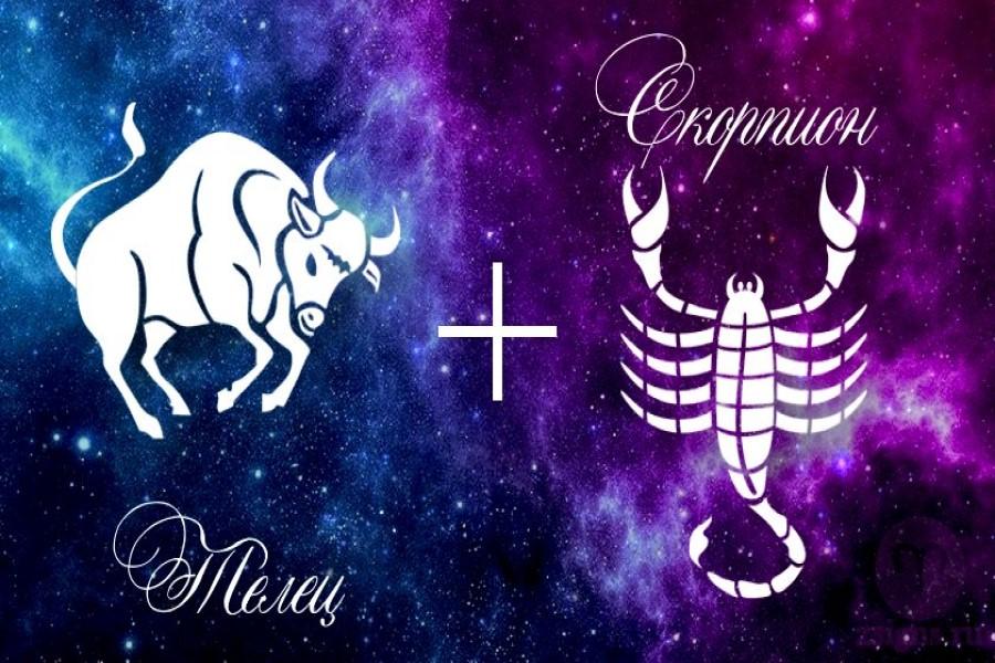 Гороскоп совместимости знаков зодиака Телец и Скорпион в отношениях, в любви, в браке