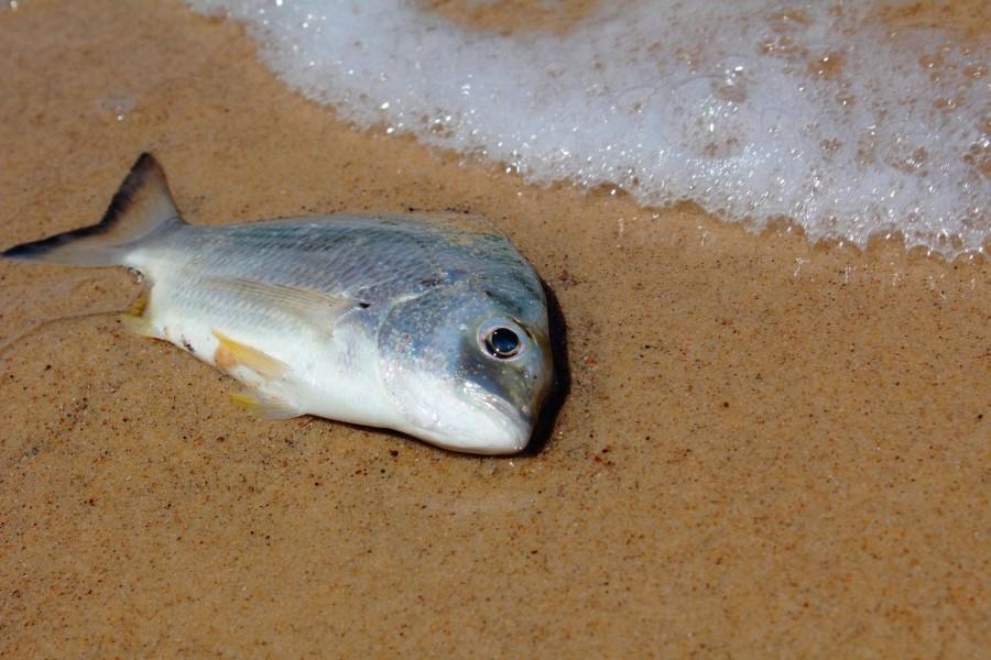 К чему снится мертвая рыба согласно популярным сонникам?