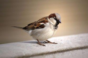К чему снится птица, залетевшая в дом: толкование известных сонников