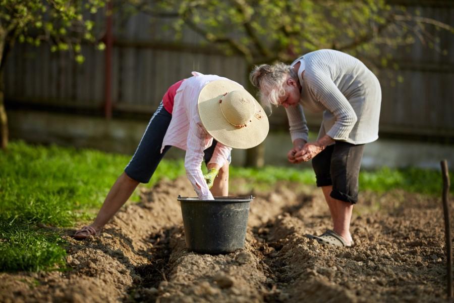 К чему снится сажать картошку во сне: толкования для женщины и мужчины