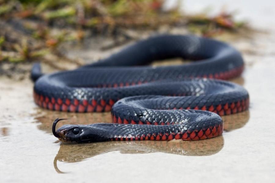К чему снится убить змею во сне: толкование образа по известным сонникам