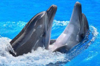 К чему снятся дельфины женщине и мужчине: толкования сонников