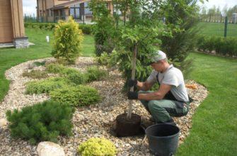 Какие деревья можно сажать возле дома, а какие нельзя и почему?