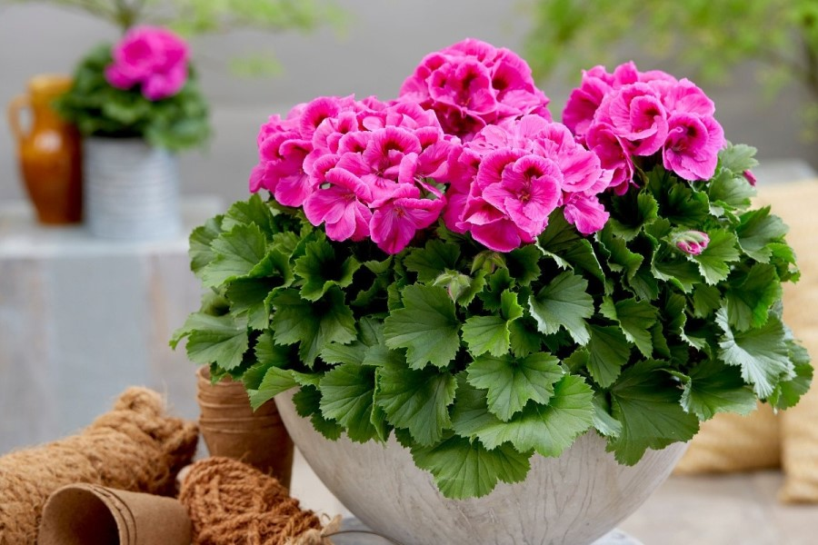 Какие домашние цветы привлекают счастье, любовь и деньги, а от каких стоит немедленно избавиться?