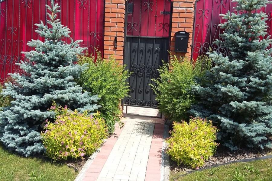 Можно ли сажать ель у входа в дом: народные приметы и суеверия