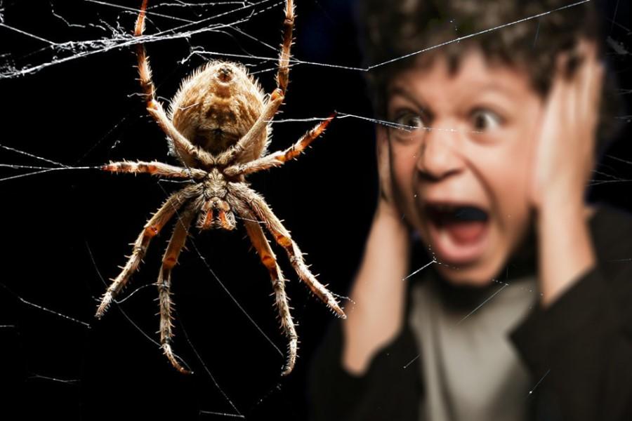 Народные приметы: что означает увидеть паука