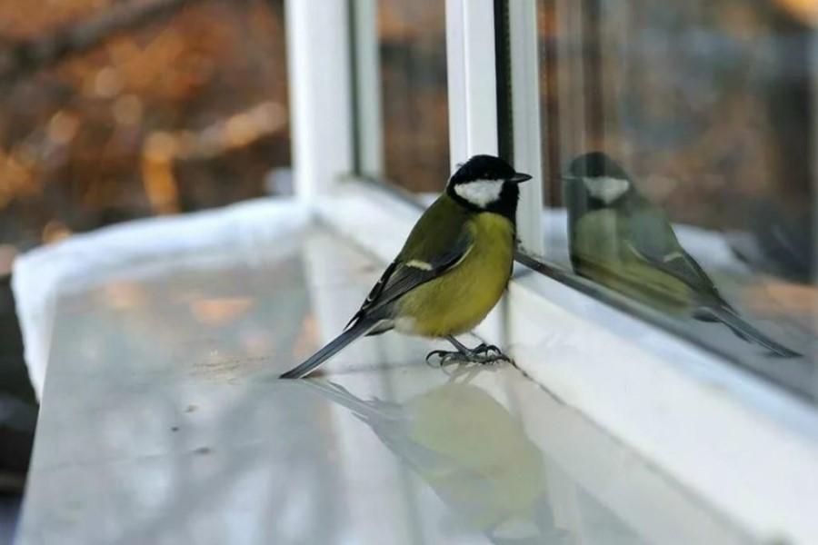 Птица ударилась в окно — народные приметы и значение суеверия