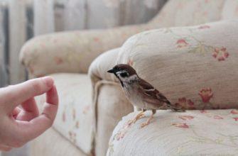 Птица залетела в дом: о чем говорят народные приметы?